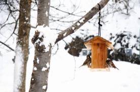 vogelhaus zum selbstbauen und der winter kann kommen hausbau. Black Bedroom Furniture Sets. Home Design Ideas